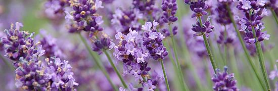 アロマテラピー検定教材「Natural Herb ナチュラルハーブ」アロマテラピー検定教材の販売サイト。日本アロマ環境協会(AEAJ)の認定教室がオリジナル教材を販売しています。